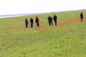 Любование цветением тюльпанов - отзыв туриста